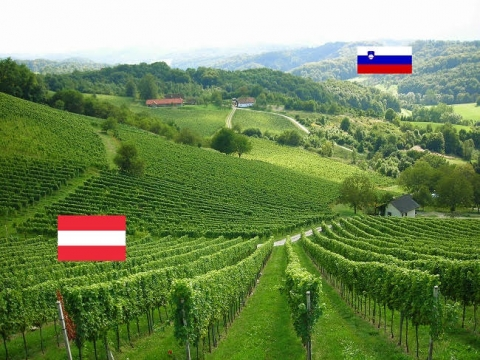 The Ried Zieregg, a single vineyard site on the border to Slovenia, © Gerhard Elze
