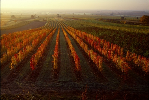 Burgenland in autumn   © AWMB/Lukan